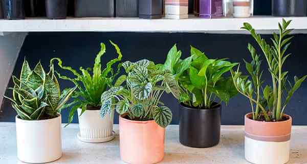 Plants To Have In Your Bedroom To Help You Sleep Better